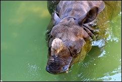 rhino ears